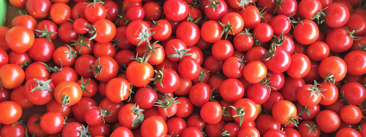 New Blog: How to Save Your Tomato Seeds